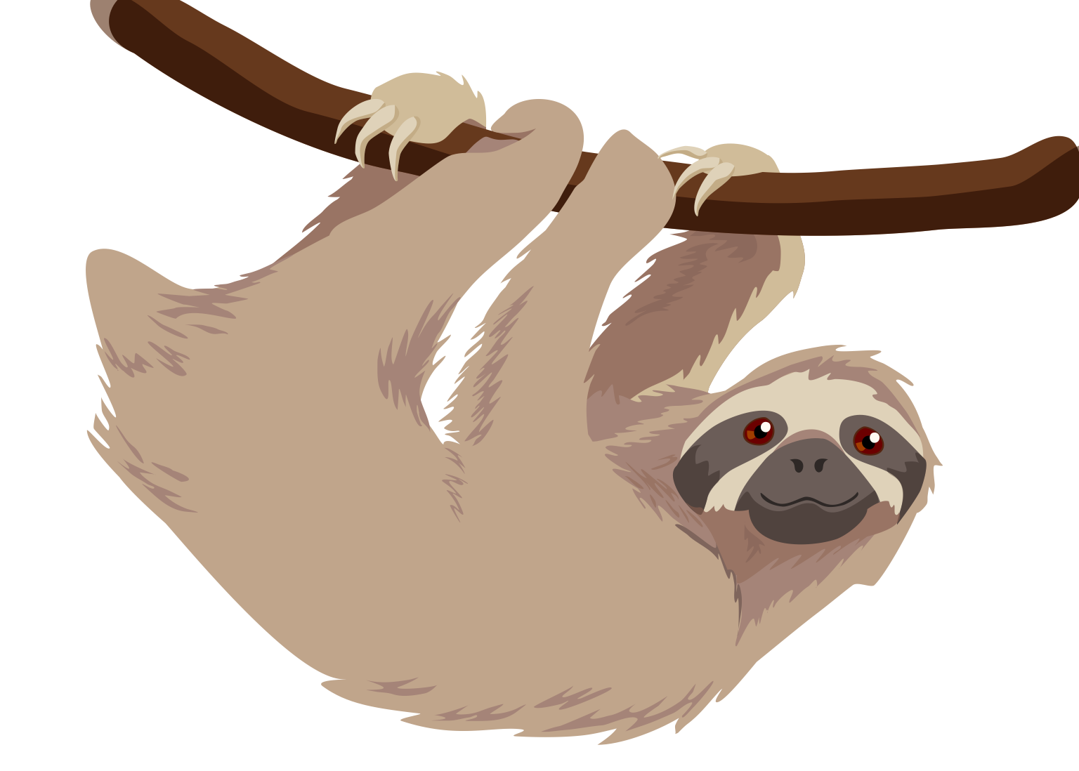 Three toed sloth | Veronica Guzzardi