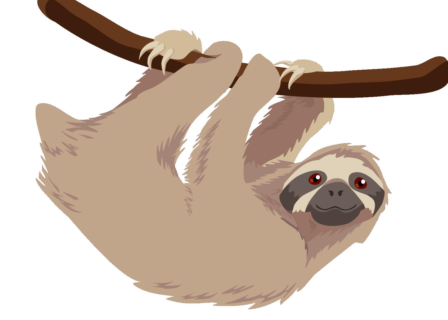 Three toed sloth | Veronica Guzzardi