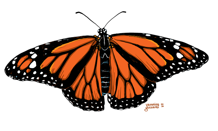 Monarch Butterfly by Veronica Guzzardi