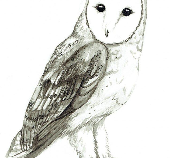 The 2016 Superb Owl