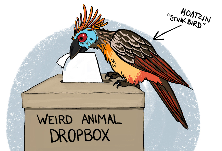 The Weird Animal Dropbox